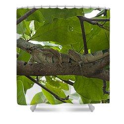 Iguana In Tree Shower Curtain by Dan Friend