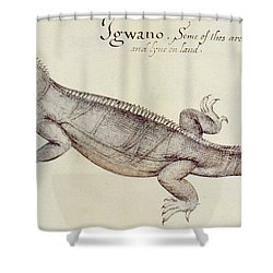 Iguana Shower Curtain by John White