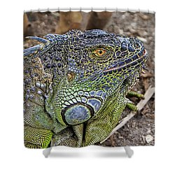 Shower Curtain featuring the photograph Iguana by Olga Hamilton