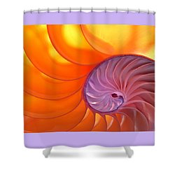 Illuminated Translucent Nautilus Shell With Spiral Shower Curtain