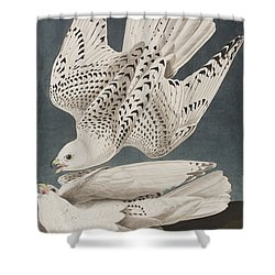 Illustration From Birds Of America Shower Curtain