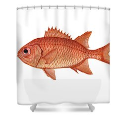 Illustration Of A Brick Soldierfish Shower Curtain by Carlyn Iverson