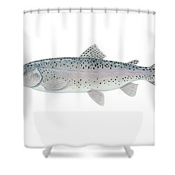 Illustration Of A Steelhead Trout Shower Curtain by Carlyn Iverson