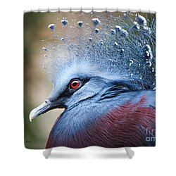 Illustrious Shower Curtain
