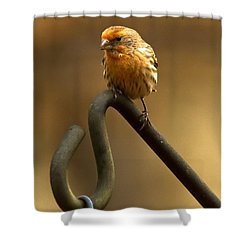 Shower Curtain featuring the photograph I'm Orange by Robert L Jackson