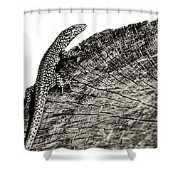 I'm Watching You Shower Curtain by Laura Melis