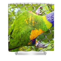 Img 30 Shower Curtain