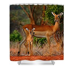 Impala And Young Shower Curtain by Amanda Stadther