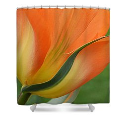 Imperfect Beauty Shower Curtain by Felicia Tica