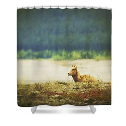 Impressionistic Style Of A Bighorn Shower Curtain by Roberta Murray