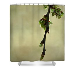 In A Dark And Silent Place Shower Curtain by Rebecca Sherman