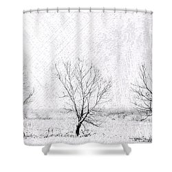 In A Line. Winter Trees Shower Curtain by Jenny Rainbow