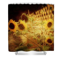 Sunflowers And Lattice Shower Curtain by Toni Hopper