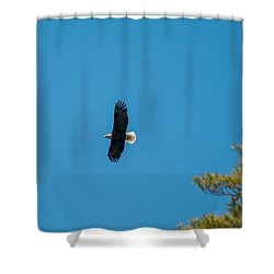 Shower Curtain featuring the photograph In Flight by Brenda Jacobs