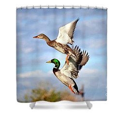 In-flight Shower Curtain