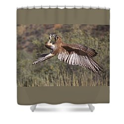In Flight Meals Shower Curtain by Venetia Featherstone-Witty