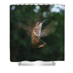 Shower Curtain featuring the photograph In Flight by Photographic Arts And Design Studio