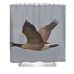 In Flight Shower Curtain by William Norton