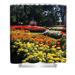 In Full Bloom Shower Curtain by Kay Novy