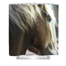 Shower Curtain featuring the photograph In His Farthest Wanderings Still He Sees by Linda Shafer