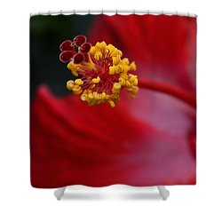 In Red Shower Curtain by Larry Bishop