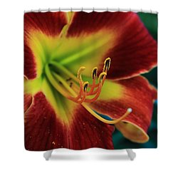 In The Ant's Eye Shower Curtain by Reid Callaway