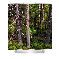 In The Depth Of Northern Forest Shower Curtain by Jenny Rainbow