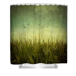 In The Field Shower Curtain by Trish Mistric
