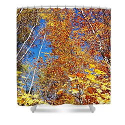 In The Forest At Fall Shower Curtain