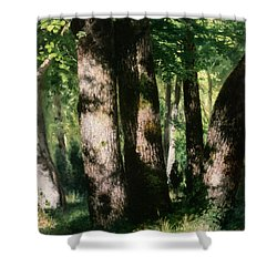 In The Forest Of Fontainebleau Shower Curtain by Pierre Auguste Renoir