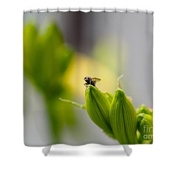 In The Garden - The Champ Shower Curtain