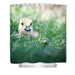 In The Grass Shower Curtain by Priya Ghose