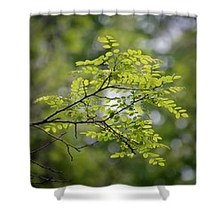 Shower Curtain featuring the photograph In The Green by Kerri Farley