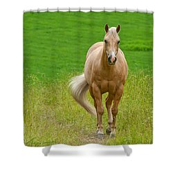 In The Meadow Shower Curtain by Torbjorn Swenelius