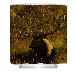 In The Mudhole Shower Curtain by Jeff Swan