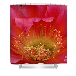 Shower Curtain featuring the photograph In The Pink by Vivian Christopher