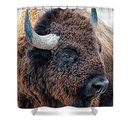 Bison The Mighty Beast Bison Das Machtige Tier North American Wildlife By Olena Art Shower Curtain
