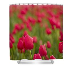 Seeing Red Shower Curtain by Nick  Boren