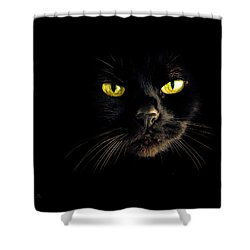 In The Shadows One Black Cat Shower Curtain by Bob Orsillo