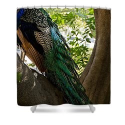 In The Shadows Shower Curtain by Peggy Hughes