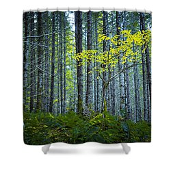 In The Woods Shower Curtain by Belinda Greb