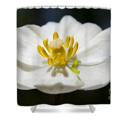 Inchworm  Shower Curtain by Jeannette Hunt