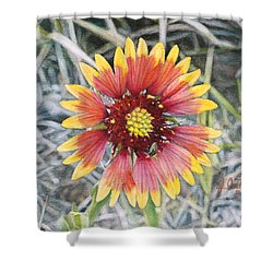 Indian Blanket Shower Curtain by Joshua Martin