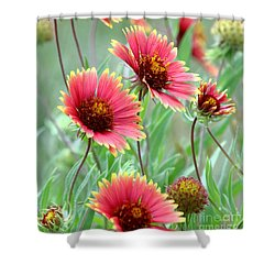 Indian Blanket Wildflowers Shower Curtain