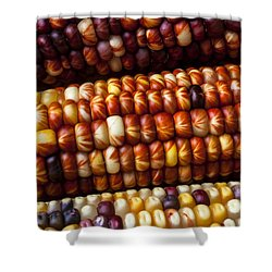 Indian Corn Harvest Time Shower Curtain by Garry Gay