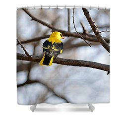Indian Golden Oriole Shower Curtain by Fotosas Photography