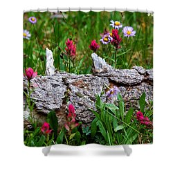 Shower Curtain featuring the photograph Indian Paintbrush by Ronda Kimbrow