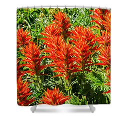 Indian Paintbrush Shower Curtain by Sue Smith