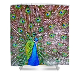 Indian Peacock Shower Curtain by Deena Stoddard