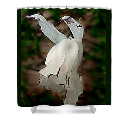 Indian Pipe Shower Curtain by William Tanneberger